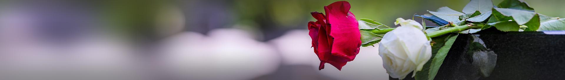 Biała i czerwona róża na trumnie